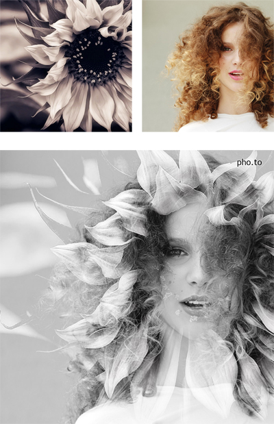 A double exposure black and white portrait with a face photo of curly girl merged with an artistic sunflower image