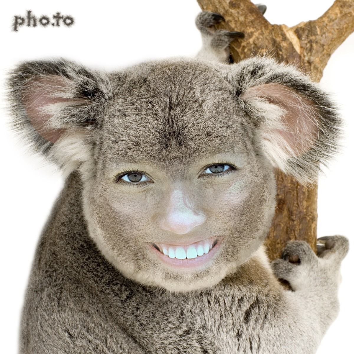 This face in hole effect adds your face to a koala body
