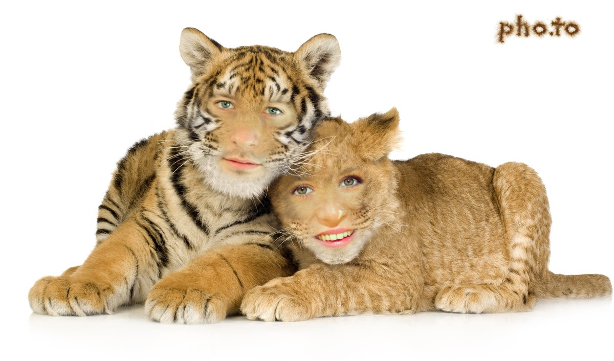 An unusual photo template for couples which turns you into a couple of loving felines