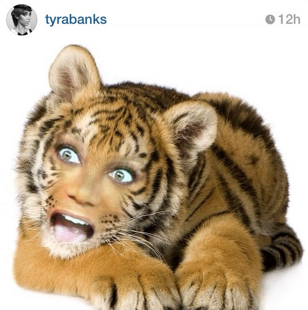 Tyra Banks has made this human to animal photo montage on her birthday and turned herself into a tiger