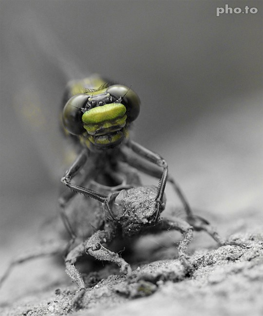 Green color is isolated on a macro shot with a fly by a free onlinec color filter