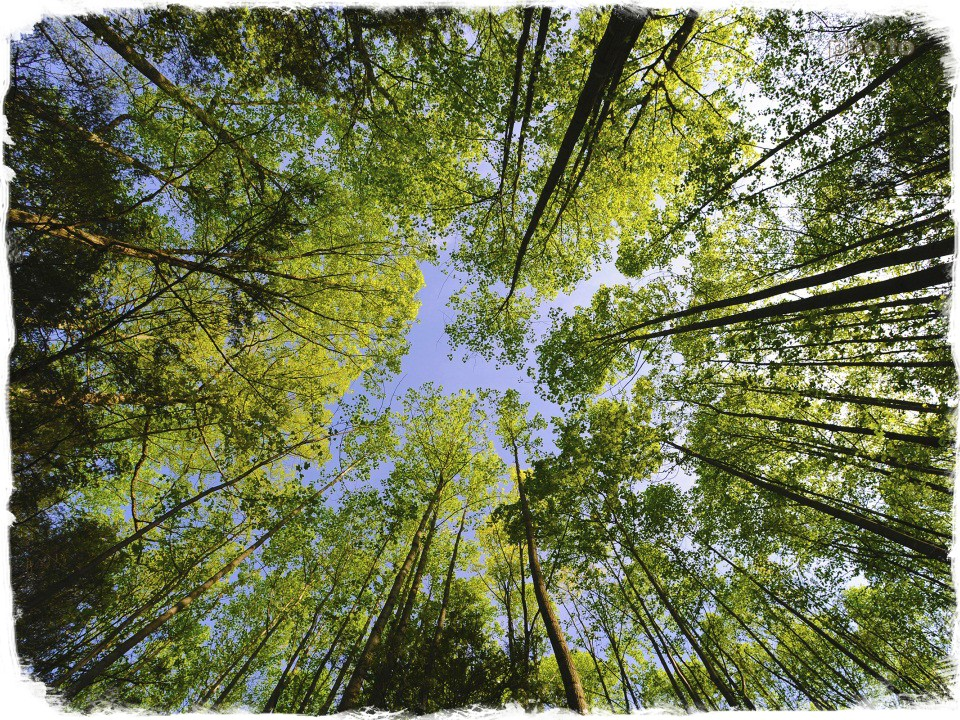 Photo of tree tops taken with high perspective
