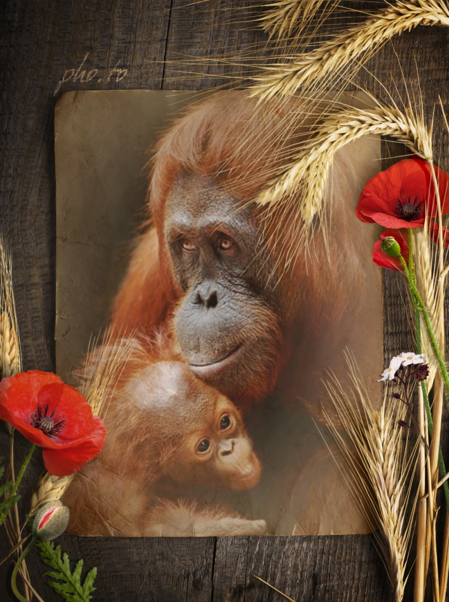 A greeting card for Mother's day showing an animal family