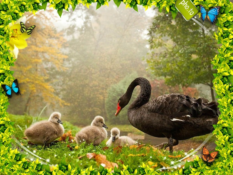 A greeting card for Mother's day showing a swans family
