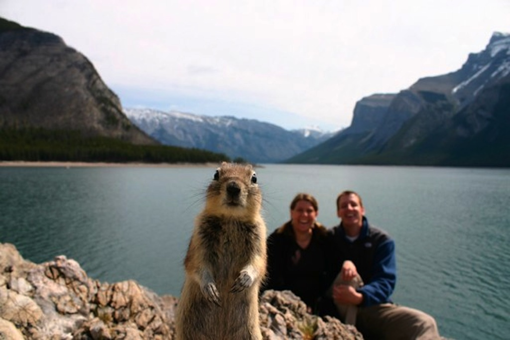 The original photo of famous Internet meme: the Brandts and Banff Squirrel