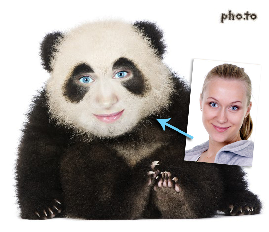 Human to panda face photo montage makes you look so cute!