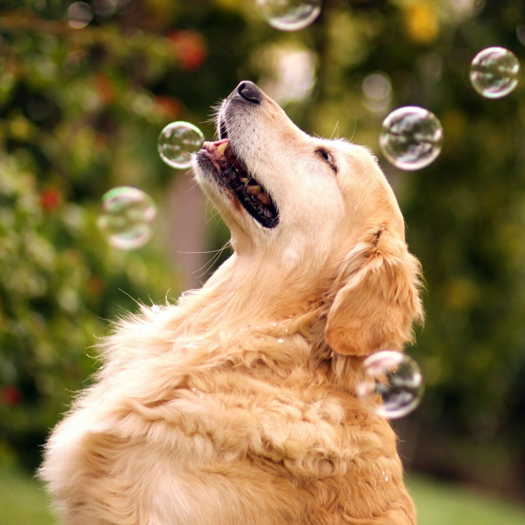 Dog standing in soup bubbles