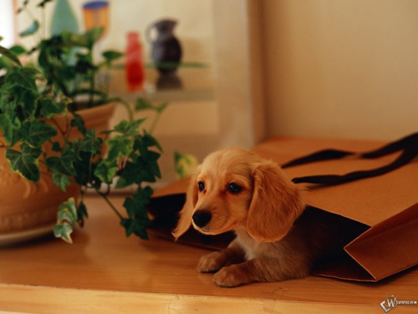 Puppy hiding in a paper bag