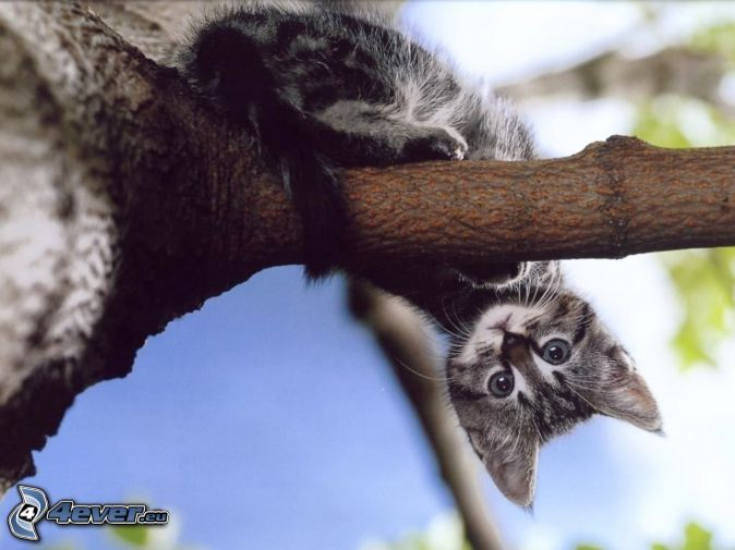 Kitten sitting on a tree