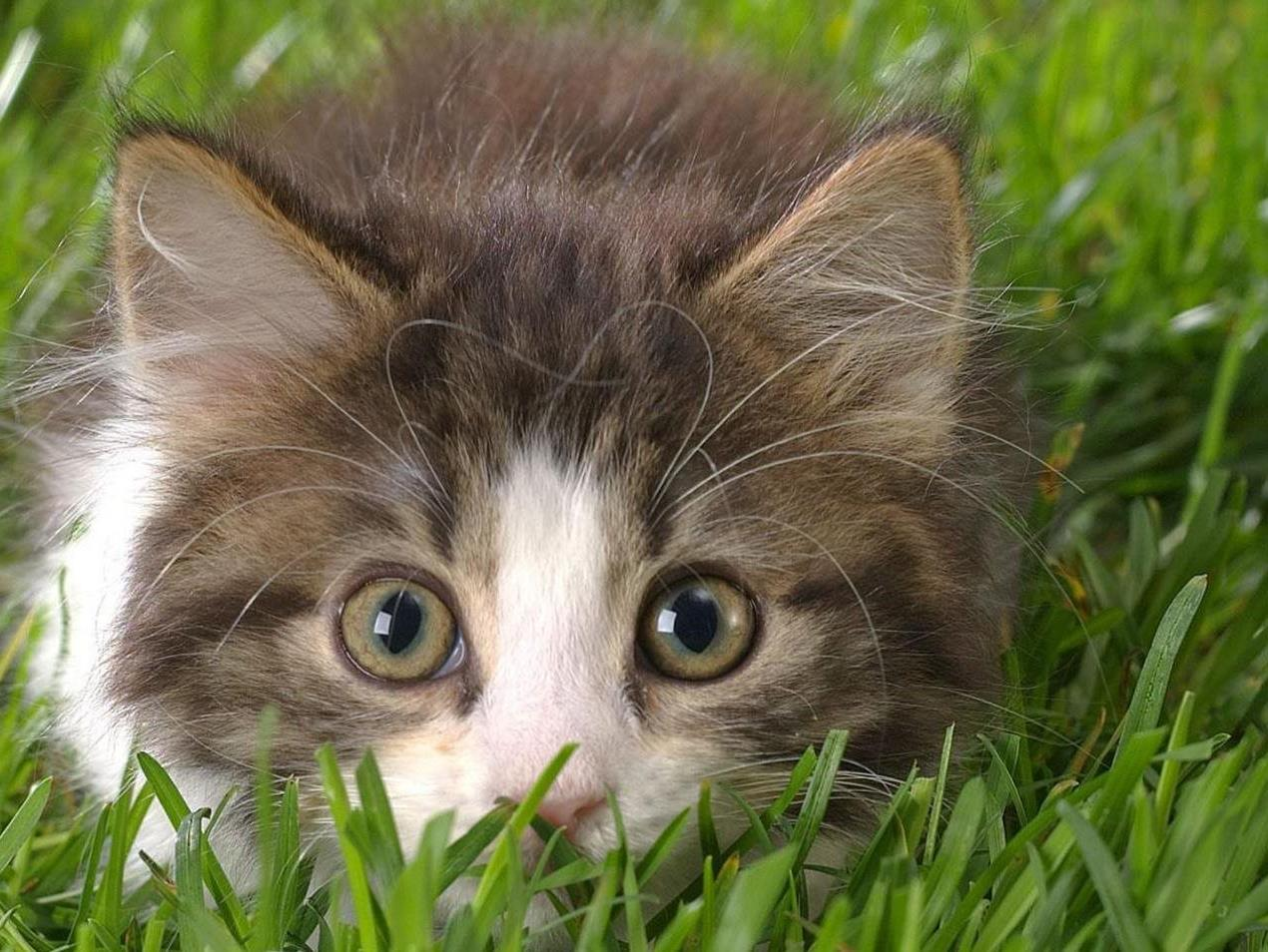 A small kitten hiding in grass
