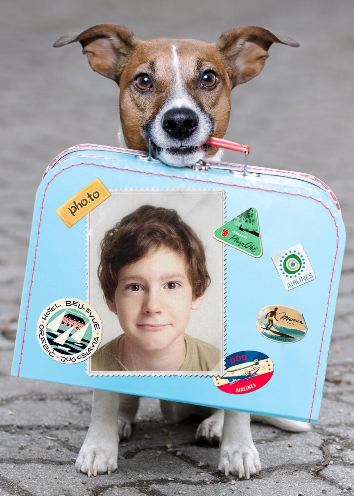 Photo collage with a dog, traveling suitcase and a young boy