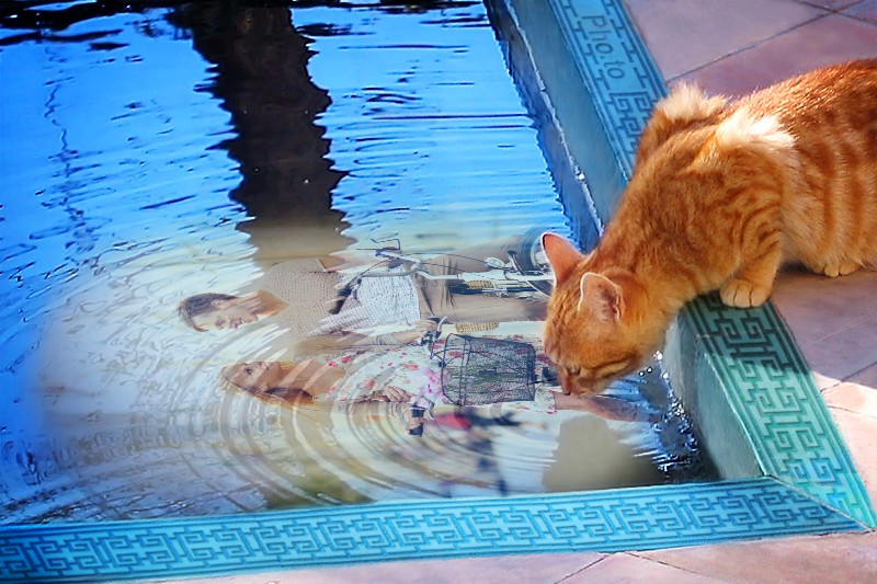 Photo collage with a happy couple, water pool and a red cat