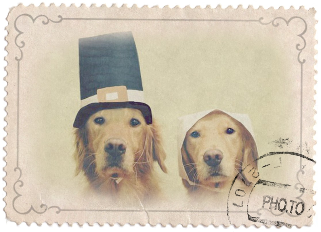 A photo of labrador dogs wearing colonists hats is turned into an old post stamp with a vintage photo effect