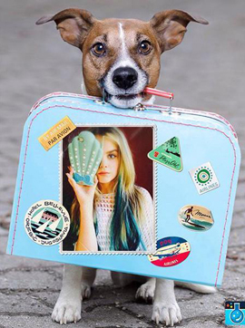Travel photo frame with a zany dog