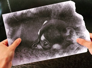 Pencil vs reality effect added to a photo of a cute puppy