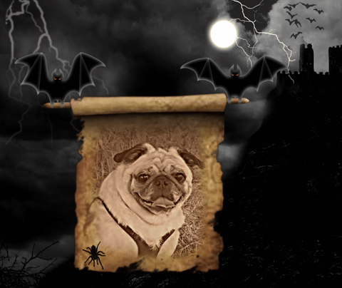 A funny picture where flying bats carry a picture of Halloween pug dog