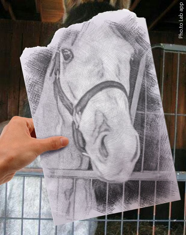 Photo of a beautiful horse turned into s pencil sketch
