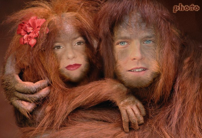 Couple of romantic apes